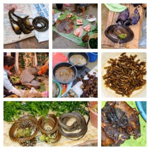 Jungle food, exotic food, south east asia, Laos