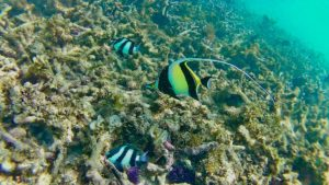 Snorkelling, fish, diving, coralreef, tropical fish, Flic en Flac, Mauritius,