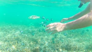 Snorkelling, Flic en Flac, Mauritius, sea, underwater life, tropical fish.