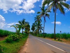 Road trip, palm trees, blue sky, summer, Mauritius