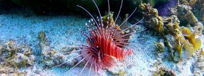 Mauritius – Amazing underwater world