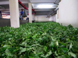 #Mauritius#Boischeri#Tearoute#roadtrip#paradise#tropicalparadise#tropicalisland#teaplantation#teaproduction