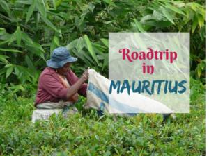 #mauritius #teaplantation #tea #paradiseisland #tropicalisland