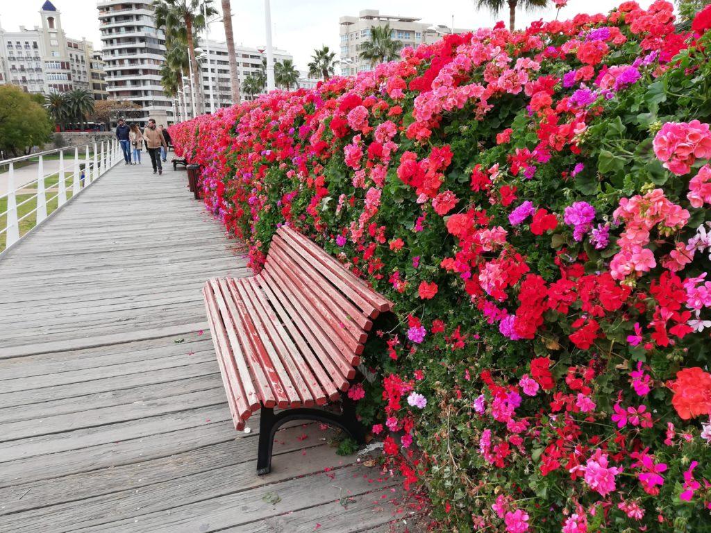 Calatrava, CAC, Ciudad de las artes y las ciencias, Valencia, Spain, Iberia, biking, Turia Gardens, blooming flowers