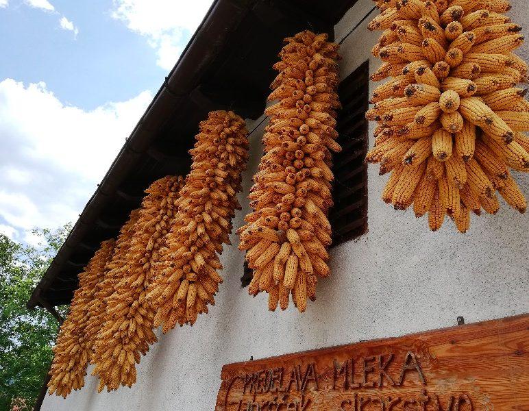 corn soca valley